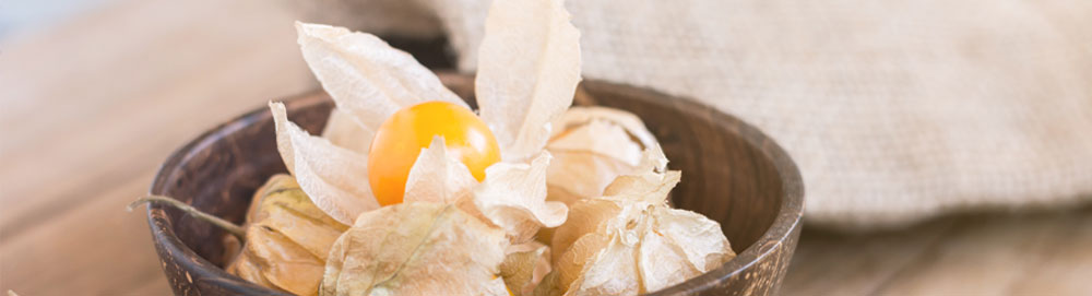 article physalis